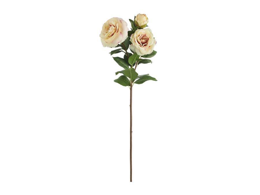 Yellow Camellia x3 Blooms Stem
