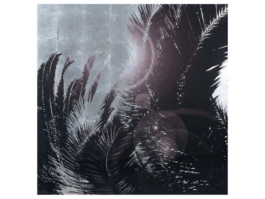 Sliver Leaf Palm Tree - A