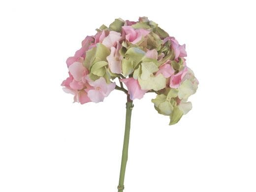 Hydrangea Pink and Green