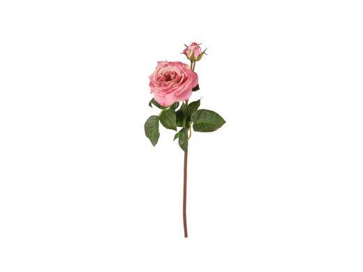 Pink Garden Rose -Fresh Touch