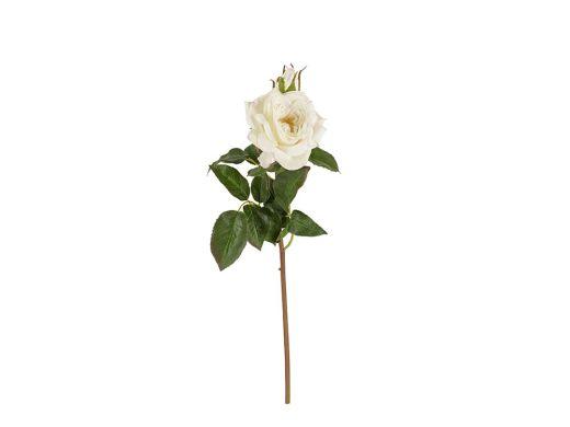 White Garden Rose Single Stem