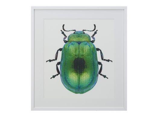 Green Beetle 90x115cm