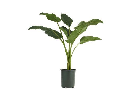 Calla Lily Leaf Pot Plant