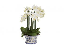 Phalaenopsis Arrangement - view2